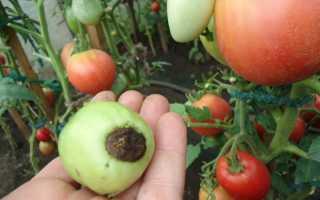 Опрыскивание помидор борной кислотой