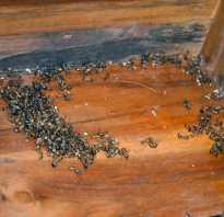 Как вывести муравьёв из бани